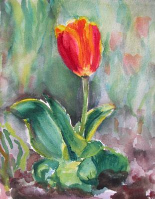 """Tulip 9"""" x 12"""" $ 295.00"""